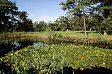 Golfbaan-Het-Rijk-van-Nunspeet-2.jpg