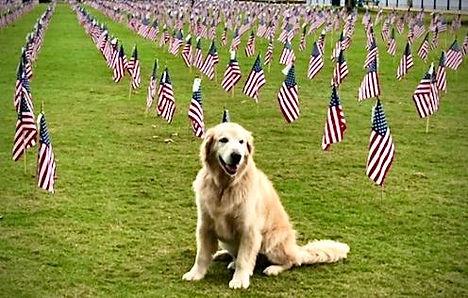 Veterans day Cowboy.jpg