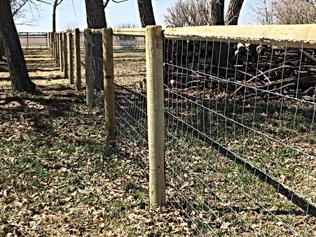 livestock fence2.jpg