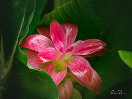 Peeking Bloom