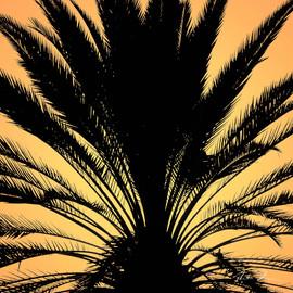 Glow Palm