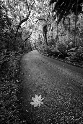 Leaf Along The Way