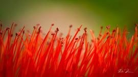 Crimson Fields