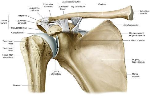 Schulter 1.jpg