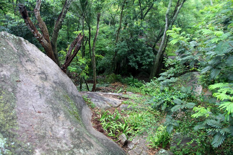 Floresta da Pedra Branca