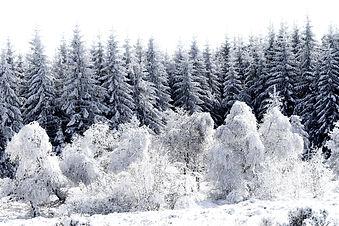 Quand la forêt s'habille en blanc