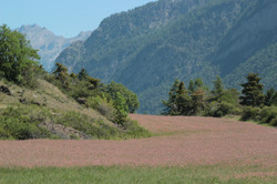 2014-06-11-HA-Autour du lac de Siguret (65)