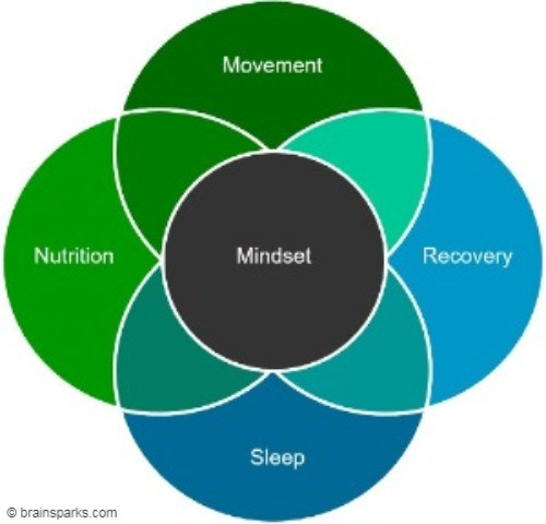 The Five Dimensions of Performance: You need, for instance, to train (movement), you need to rest (recover), you need to eat well (nutrition), you need to get enough sleep, and you need to have a positive attitude