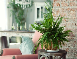 indoor-plants-on-trend-styling-tip.jpeg