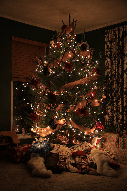 Waiting for Christmas Morning @devonvalleyfarms