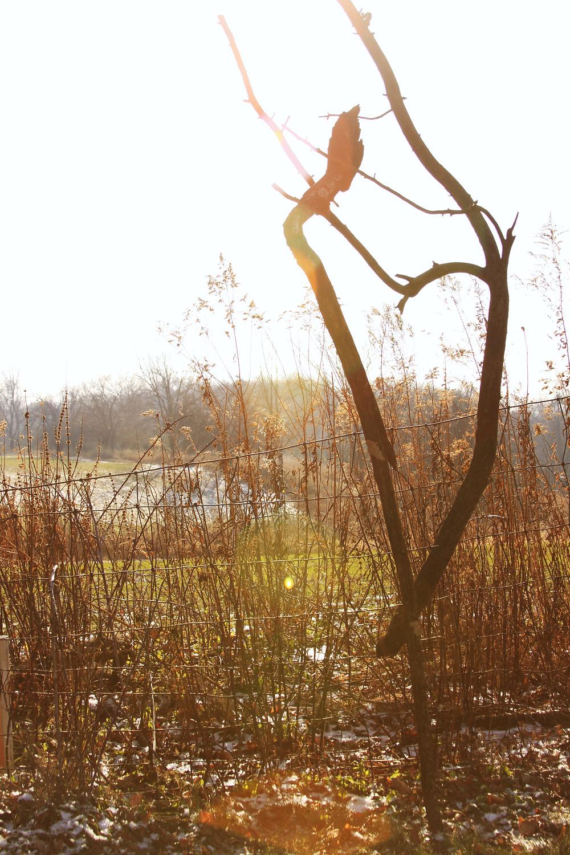 Fallen Branches create a Heart