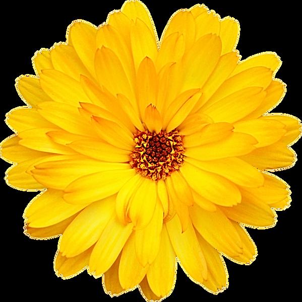flor_amarela.png