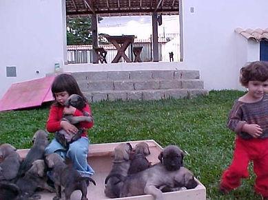fila puppy