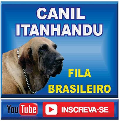 FILA BRASILEIRO TEMPERAMENTO