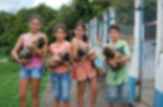 filhotes de fila brasileiro