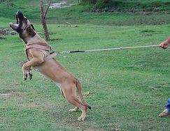 Fila Brasileiro ataque