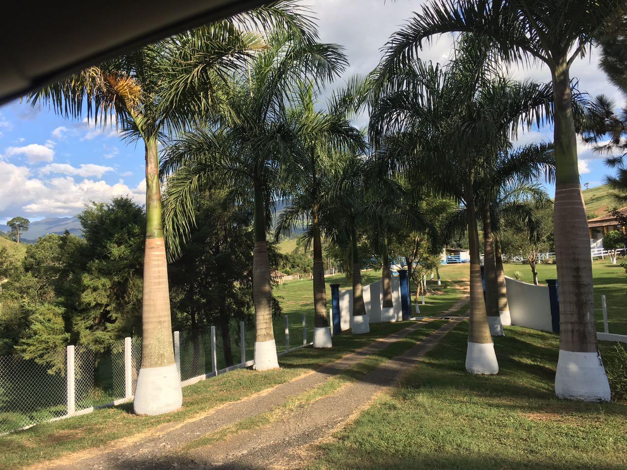 foto canil fila brasileiro-7