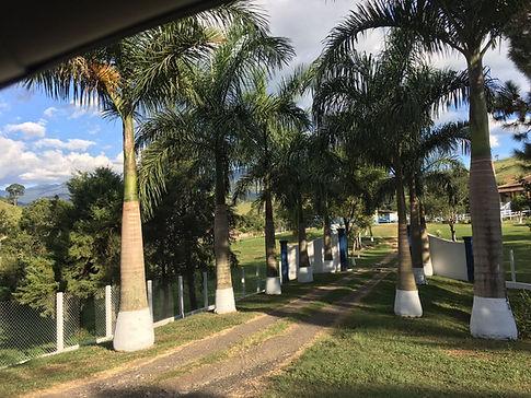 CRIADOR FILA BRASILEIRO