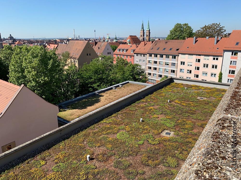 Blick auf das begrünte Dach des Johannes-Scharrer-Gymnasiums. Im Hintergrund die Kirche Sankt Sebald in Nürnberg CREDIT: Linda Weihreter