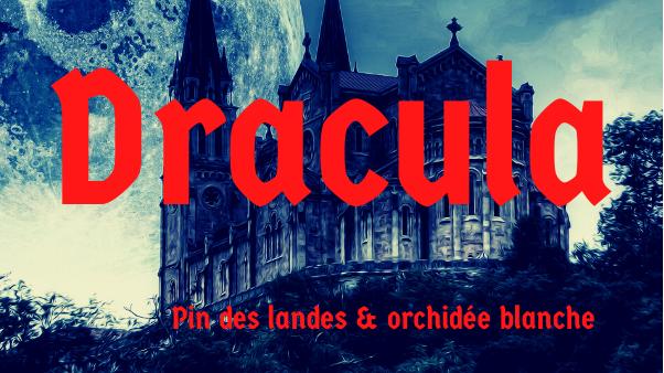 Bougie parfumée - Dracula