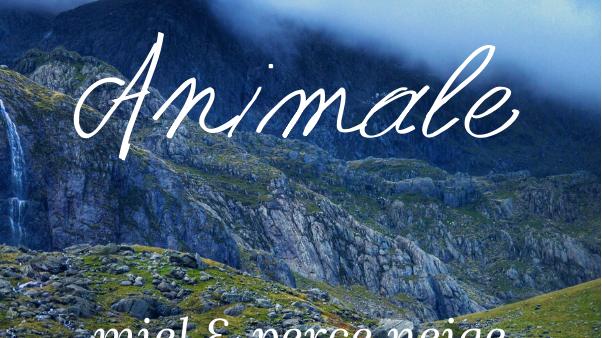Bougie parfumée - Animale