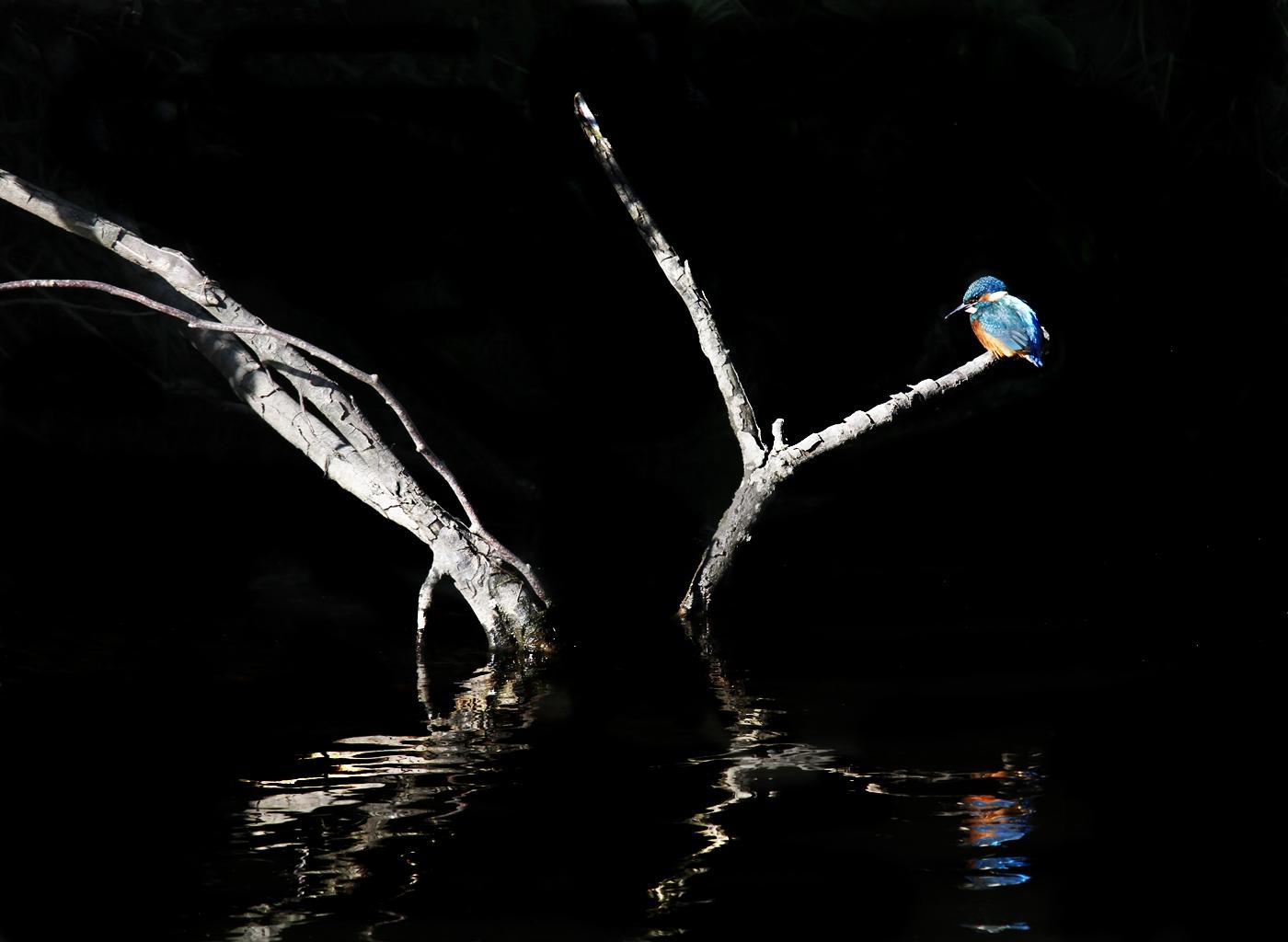 Lagan Kingfisher