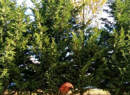 My Tree Spot