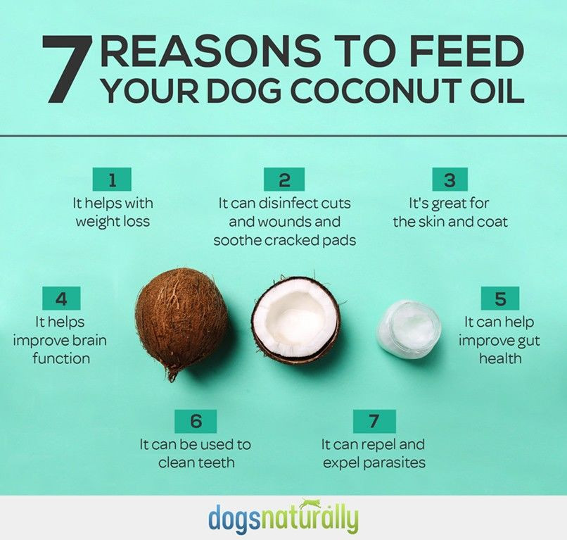 Chica + Co - 7 reasons to feed your dog with coconut oil