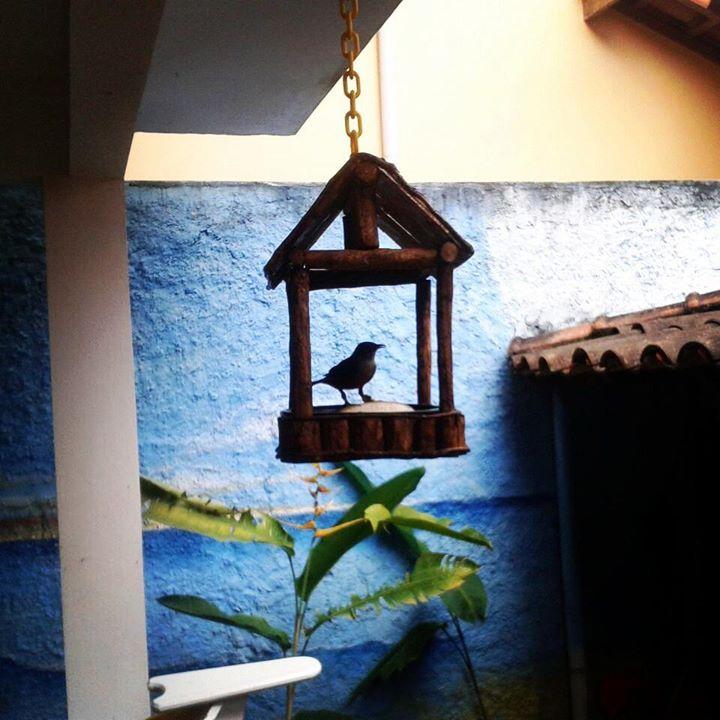 #sabiá #amigos #paratyhostel  #wildlife  #byrds  #passaros