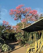Ruth_Bancroft_Garden.jpg