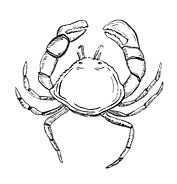 Crabe2.png