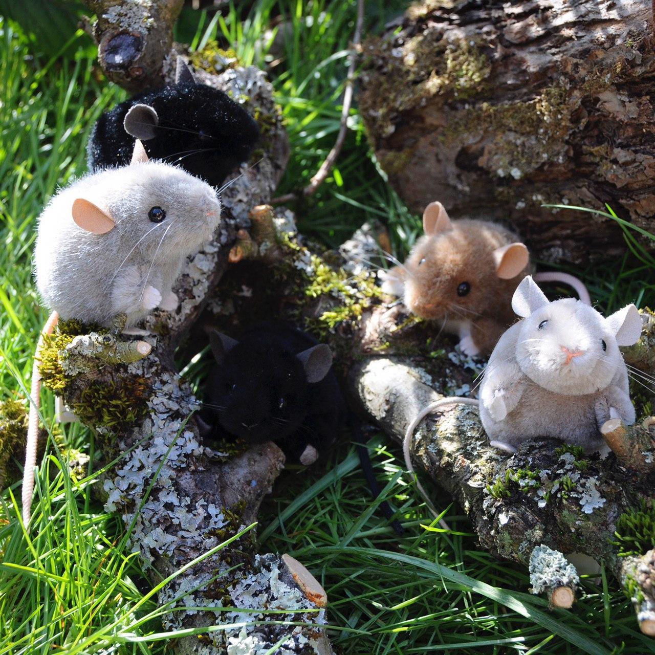 Mäuse.jpg