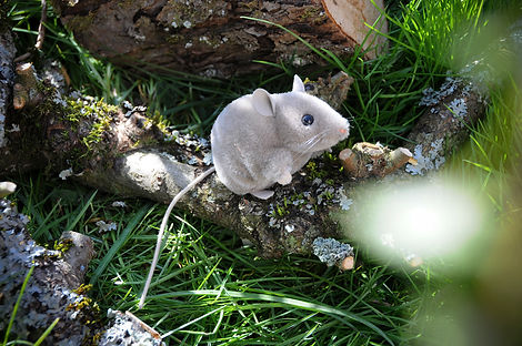 Kösen Maus.jpg
