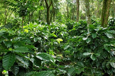 200905060234FAF_CoffeeDSC00106.jpg