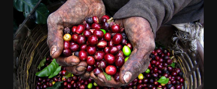 beans-in-hand.jpg