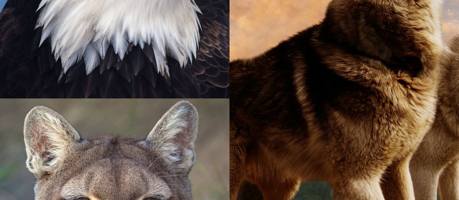 EP 70 - Eagles, wolves, cougars and #RelationshipFitness OH My!
