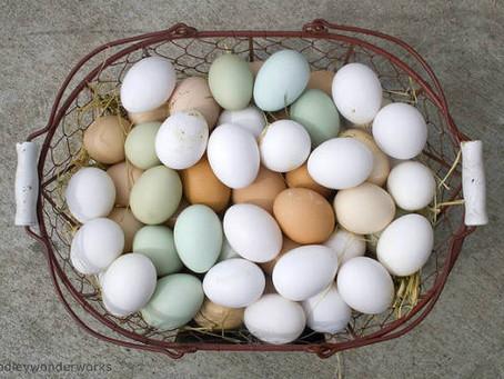 أغرب ألوان البيض في العالم