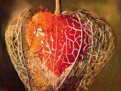 physalis, ou l'amour en cage.JPG