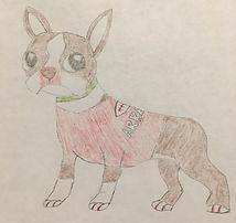 Sketch of a Boston terrier