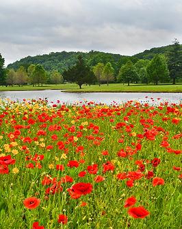 Best sky trees lake flowers.jpg