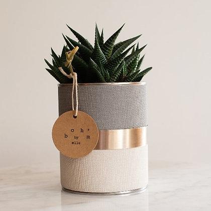 Cactus Pot Collection Lin Crème, Gris, Cerclage Argent Lisse