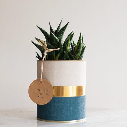 Copie de Cactus Pot Collection Lin Pétrole, Crème, Cerclage Or Lisse