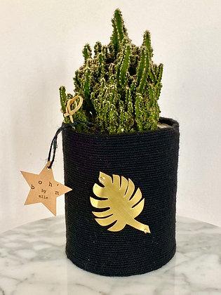 Cactus Pot Collection Capsule Exvoto Feuille