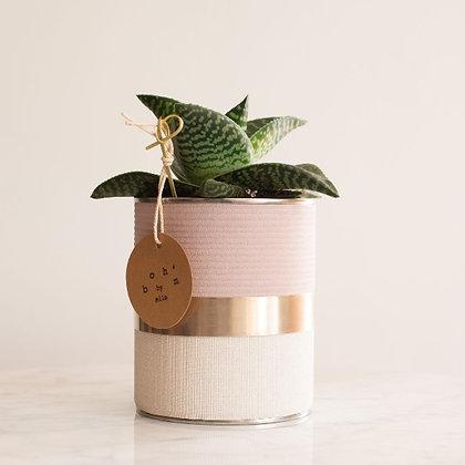 Cactus Pot Collection Lin Rose Poudré, Crème, Cerclage Argent Martelé