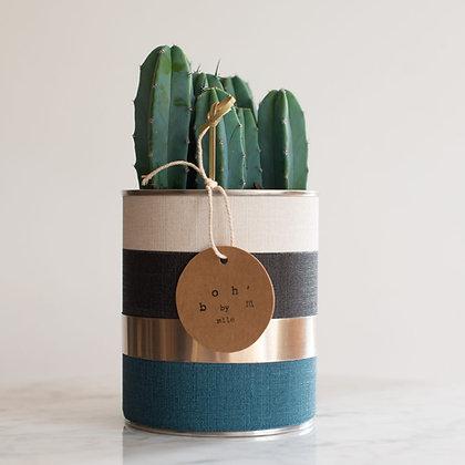 Cactus Pot Collection Lin Pétrole, Noir, Crème, Cerclage Argent Lisse