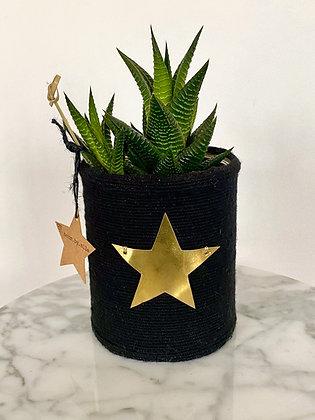 Cactus Pot Collection Capsule Exvoto Etoile