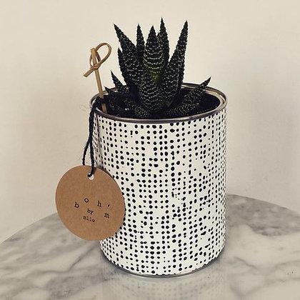 Cactus Pot Collection Ethnique Pois Grand Modèle