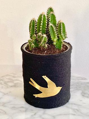 Cactus Pot Collection Capsule Exvoto Hirondelle