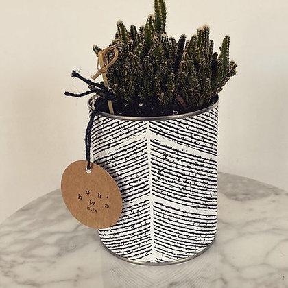 Cactus Pot Collection Ethnique Fil Grand Modèle