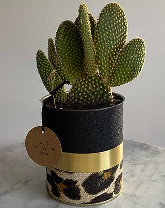 Cactus Pot Collection Léopard Noir